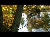 «Лес.» под музыку Классика в современной обработке - Блункер-Аранхуэзский концерт - Х.Родриго. Picrolla